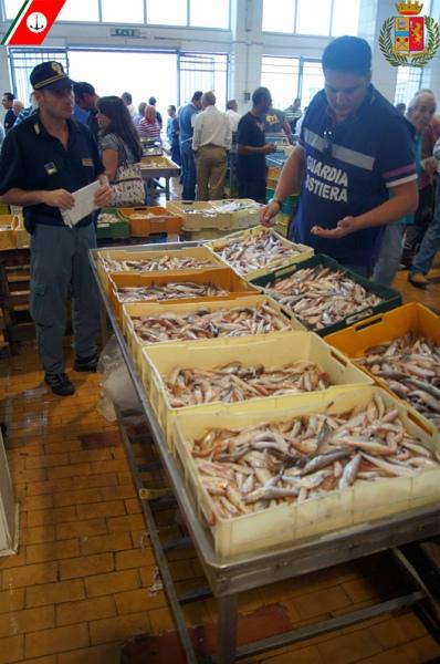 Cinquecento chili di prodotti ittici sono stati sequestrati per tutelare l'ecosistema marino